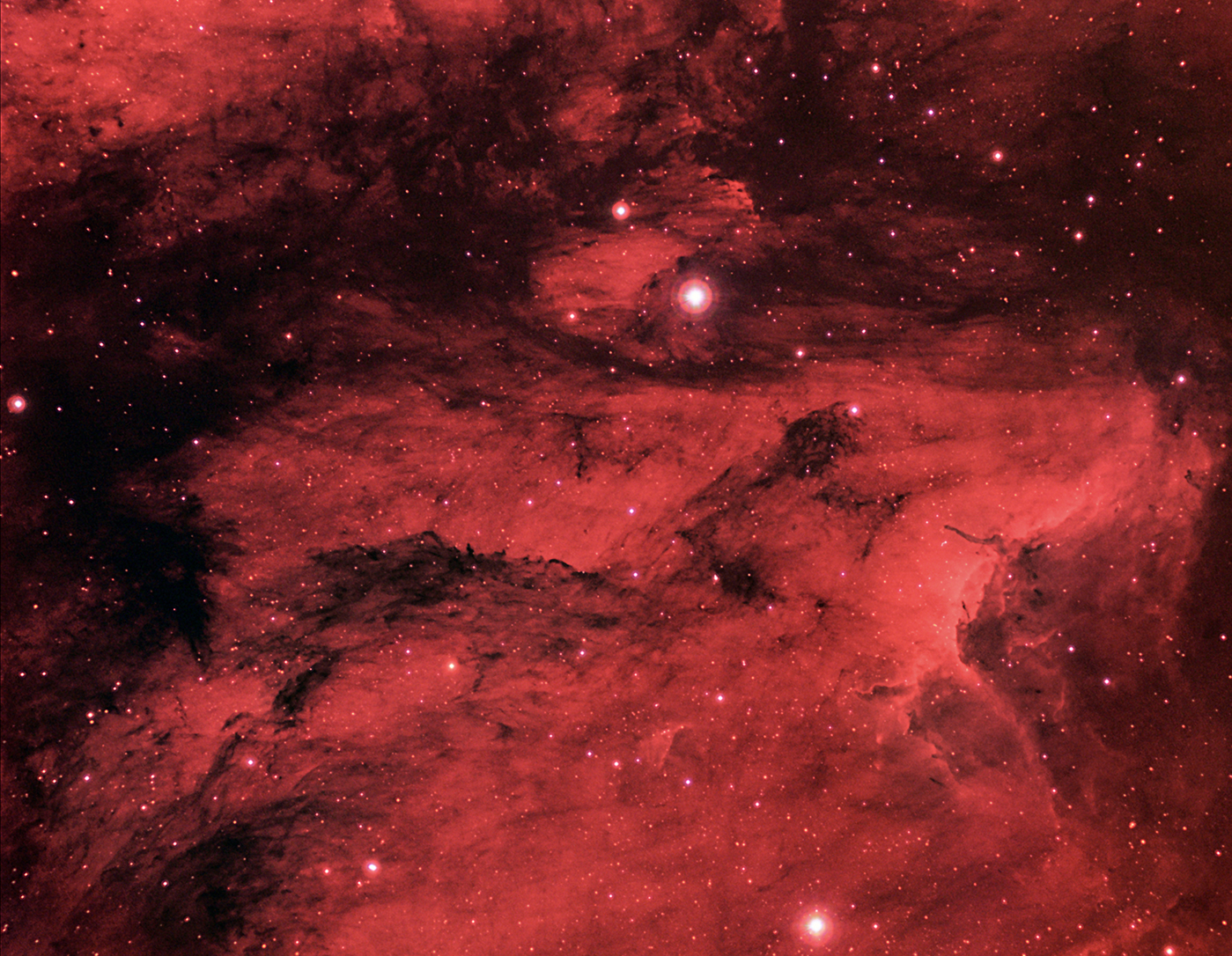 Pelican Nebula and Dark Clouds Inside